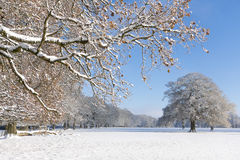 Trees and field in snow covered winter landscape Stock Photos