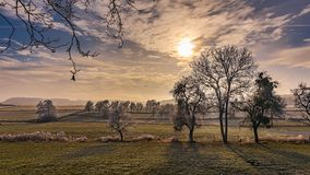 Trees in field at sunset stock images