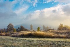 Trees on the field with tall dry grass. Cloud above the distant mountain in fog. magical autumn weather stock photos