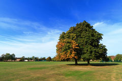 Trees and a field in UK. A field of Cranfield University in Bedford, United Kingdom Stock Photography