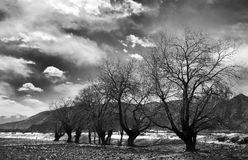 Trees. The trees in the field in winter Stock Photography