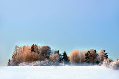 Trees in field in winter evening Royalty Free Stock Images