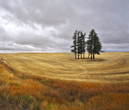 The trees in fields Stock Photography
