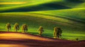 Trees and fields in countryside Royalty Free Stock Photo