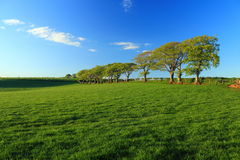 Trees and Fields in Dumfries and Galloway, Scotland stock photography