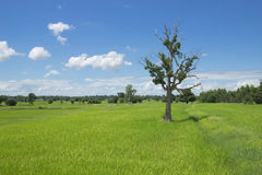 Trees and Fields Royalty Free Stock Photography