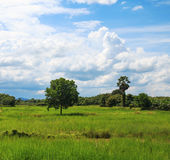 Trees on fields. Royalty Free Stock Photography