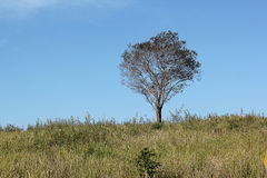 Trees and fields. Tree Media The indicative mood And feel Related to the life, death, grief, and despair Stock Images