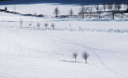 Trees in the fields in winter. Winter landscape with fields covered with snow and some bare trees Stock Images