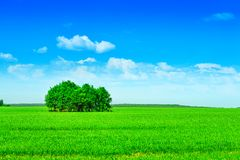 Trees on filed Royalty Free Stock Image