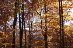 Trees in fire Royalty Free Stock Photography