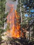 Trees on Fire Stock Photos