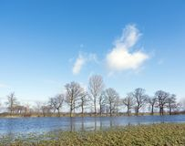 Trees on flood plains of river ijssel near Zalk between Kampen and Zwolle in the netherlands. Trees on flooded flood plains of river ijssel near Zalk between Stock Photo