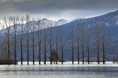 Trees on flooded plain of Cerknica lake, Slovenia Royalty Free Stock Photo