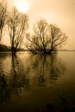 Trees in a flooded river. Once a year the Rhine River floods and the trees are standing in the river stock photography