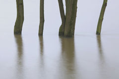Trees in a flooded river foreland. In Deventer, The Netherlands. Due to the high waterlevel of the river IJssel this foreland had flooded. This happens almost Stock Image