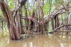 Trees in a Flooded River Stock Photography