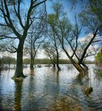The trees are flooded with water in a spring day. The cloudy sky is on the background stock photography