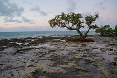 Trees on a reef beach. Royalty Free Stock Photography