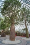 Trees, Flower Dome, Gardens by the Bay Royalty Free Stock Photos