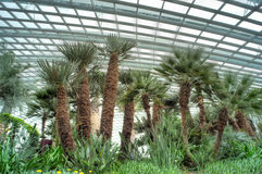 Trees, Flower Dome, Gardens by the Bay Royalty Free Stock Photography