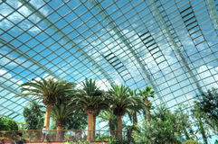 Trees, Flower Dome, Gardens by the Bay Stock Photography