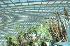 Trees, Flower Dome, Gardens by the Bay Royalty Free Stock Photo