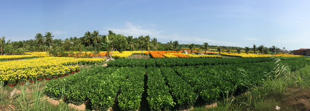 Trees and flower fields Royalty Free Stock Images