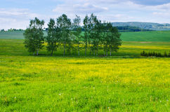 Trees on flowered meadow Stock Image