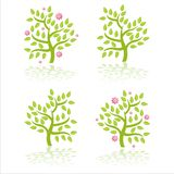 trees with flowers Stock Image