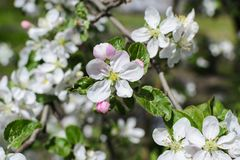 Trees flowers close up photo. Nature Royalty Free Stock Photography