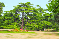 Trees and flowers in Greenwich Park, London on a sunny summer day. Stock Photography