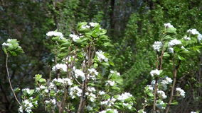 Trees And Flowers Moving In The Wind. Trees And Flowers Moving Wildly In The Wind stock video footage