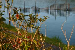 Trees and flowers that work hard in the sun by the quiet lake stock photo