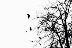Trees and flying birds. Art silhouettes of trees and flying birds Stock Photography