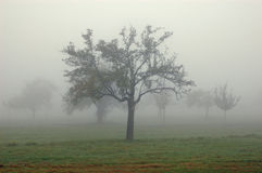 The trees in the fog Stock Image