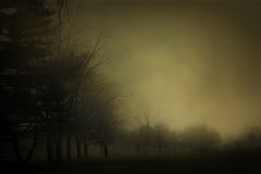 Trees in the Fog. An dreamy, atmospheric image of thick morning fog laying heavily over a field and dark trees. Somber and haunting Royalty Free Stock Photo