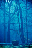 Trees through fog.. Trees through fog on a dark park road.  Green and blue light filters through the mist of the fog. Portrait orientation Stock Photo