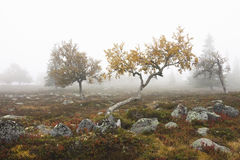 Trees in fog. Trees and rocks in autumnal fog Stock Photography