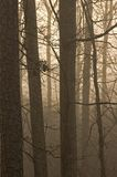 Trees & Fog. Bare Trees in Fog, Morning Light stock photography
