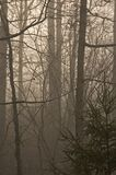 Trees & Fog. Bare Trees in Fog, Morning Light stock photos