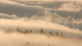Trees in Fog. Trees piercing above dense fog Stock Photography