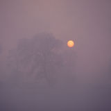 Trees in fog. Some big trees on the morning fog with beautiful sunrise Stock Image