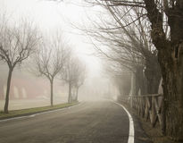 Trees in the fog royalty free stock image
