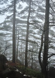 Trees in Fog Stock Photography