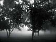 Trees in the Fog Stock Photography