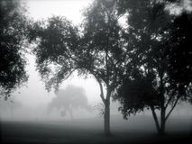 Trees in the Fog Stock Photos