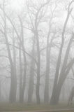Trees in fog. Trees Stock Images