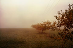 Trees in the fog Royalty Free Stock Photography