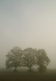 Trees in the fog. On a field in the morning Stock Image